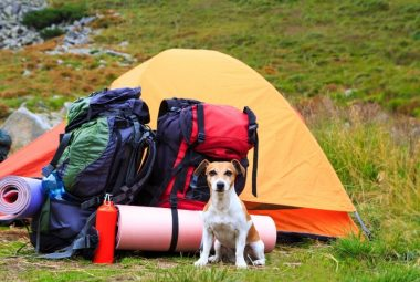Dog Bug Out Bag List